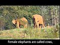 elephants video for kids
