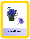 Audio Flashcards - Flowers2