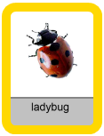 Audio Flashcards - Insects and Bugs