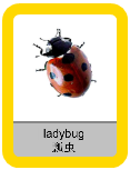 Mandarin Flashcards - Insects