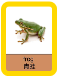 Mandarin Flashcards - Reptiles